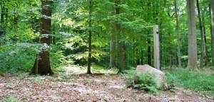 Alternative Bestattung: Ruheforst Bredenbeck