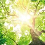 Baum zur Bestattung im eigenen Garten