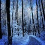 Trauer und Weihnachten und Familientage - wie gehe ich damit um?
