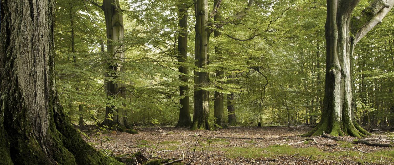 Friedwald und Ruheforst